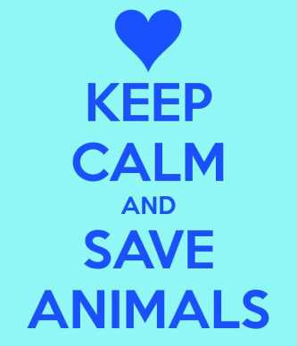 keep-calm-and-save-animals-6