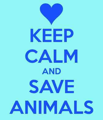 keep-calm-and-save-animals-6